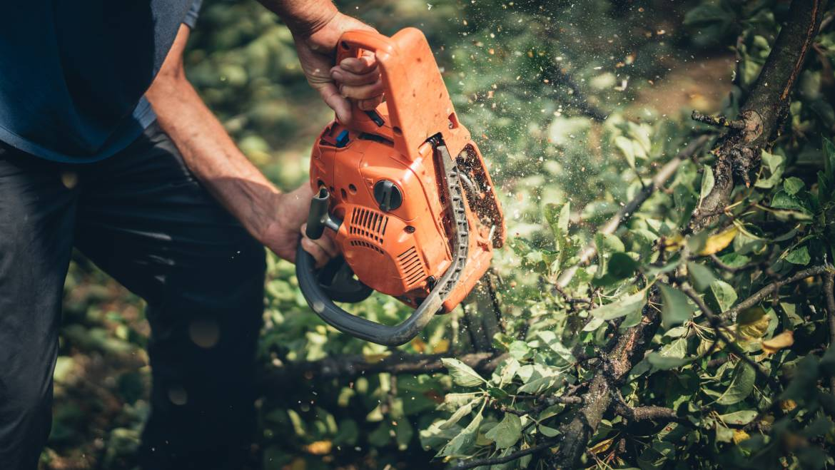 Tree Removal Frederick MD