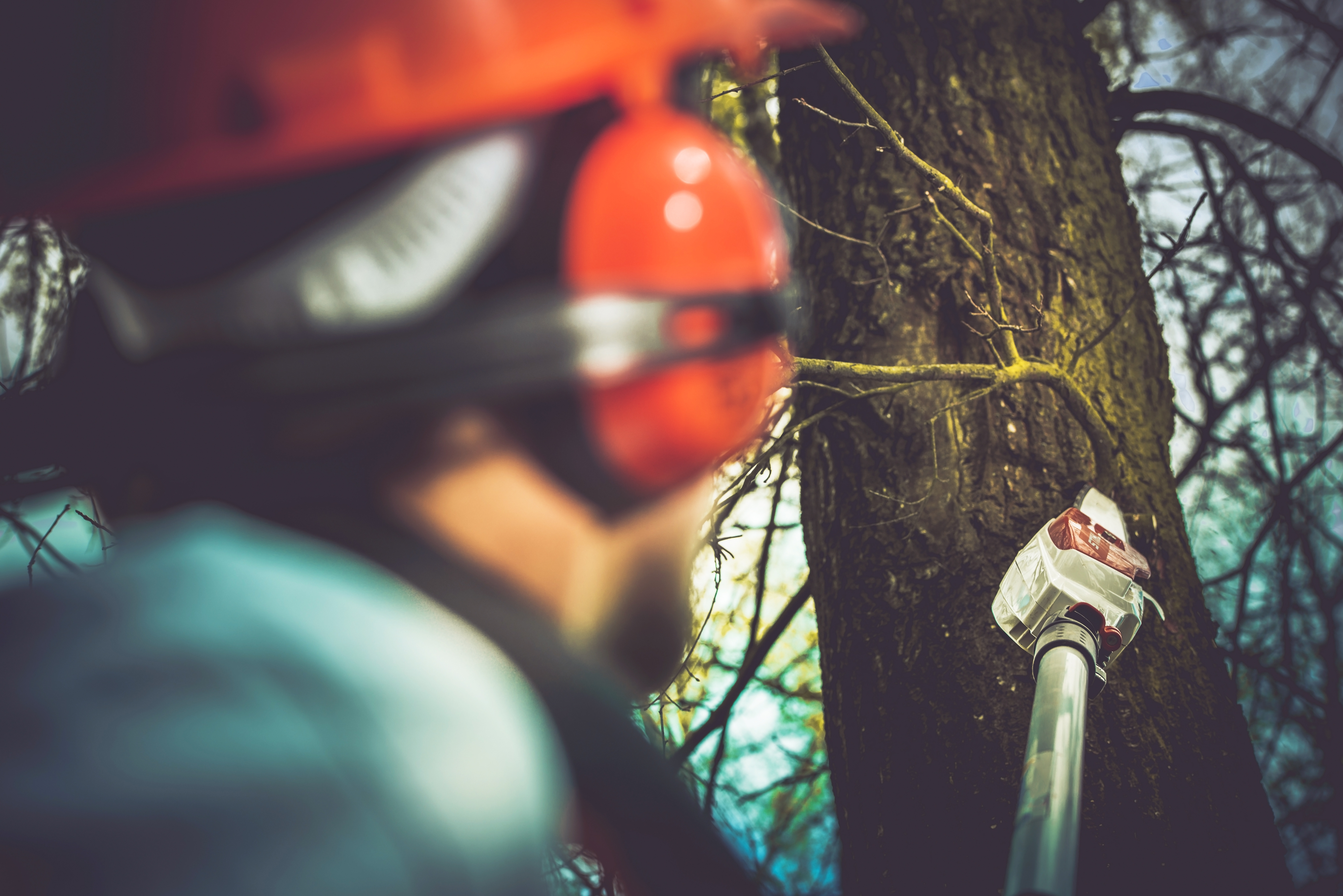 How Tree Cabling Helps Keep Your Tree Safe
